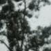 http://pascale-roger.com/sites/default/files/Arbre%2013_0.JPG
