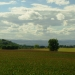 http://pascale-roger.com/sites/default/files/Contraste%20116_0.JPG