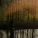 http://pascale-roger.com/sites/default/files/Contraste%20139.JPG